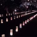 熊本市民も知らない!? 3時間半限定の幻想的な空間「本妙寺桜灯籠」とは?