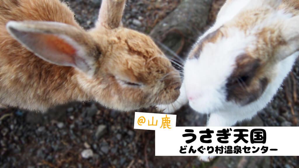 うさぎ カフェ 熊本
